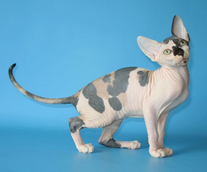 cat flea spray for furniture